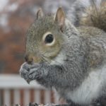 Raleigh squirrel removal Near Me